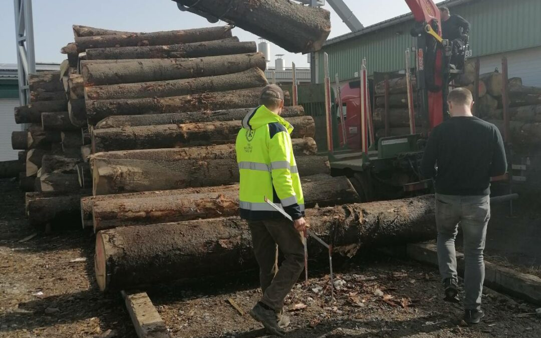Log storage – constantly fresh goods for our tonewood production